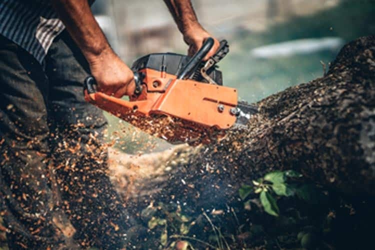 what is the best tool to cut tree branches in article