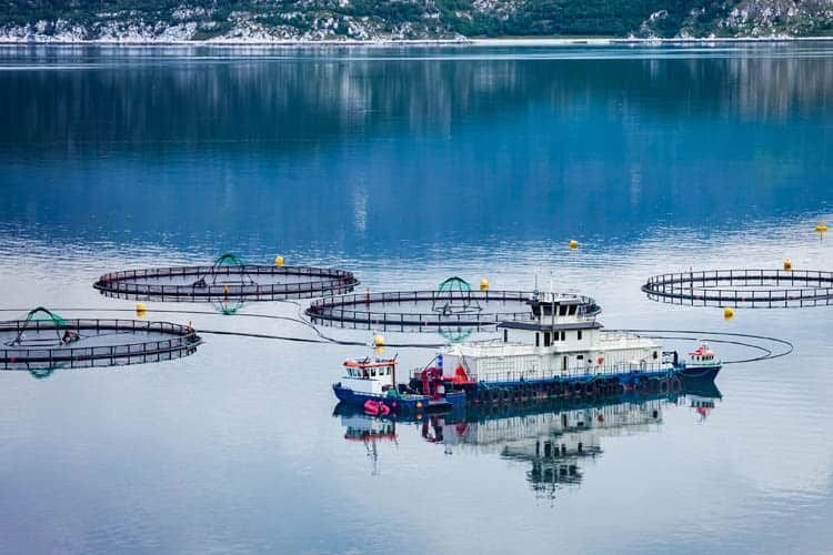 Salmon farming pens