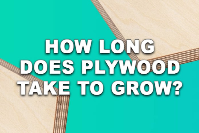How Long Does Plywood Take to Grow